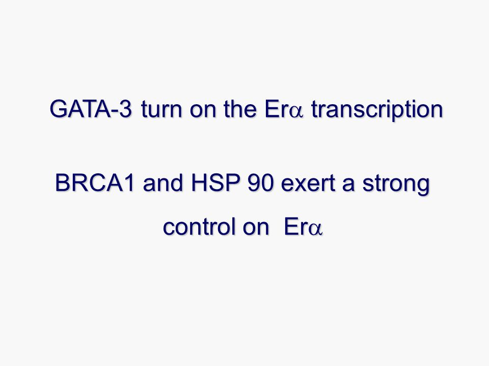 BRCA1 and HSP 90 exert a strong control on Era