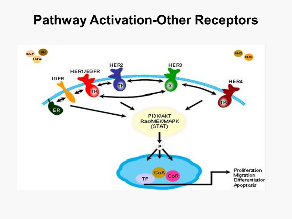 Pathway Activation-Other Receptors