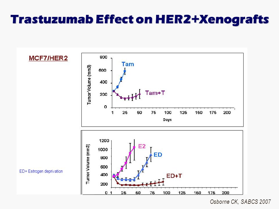 Trastuzumab Effect on HER2+Xenografts