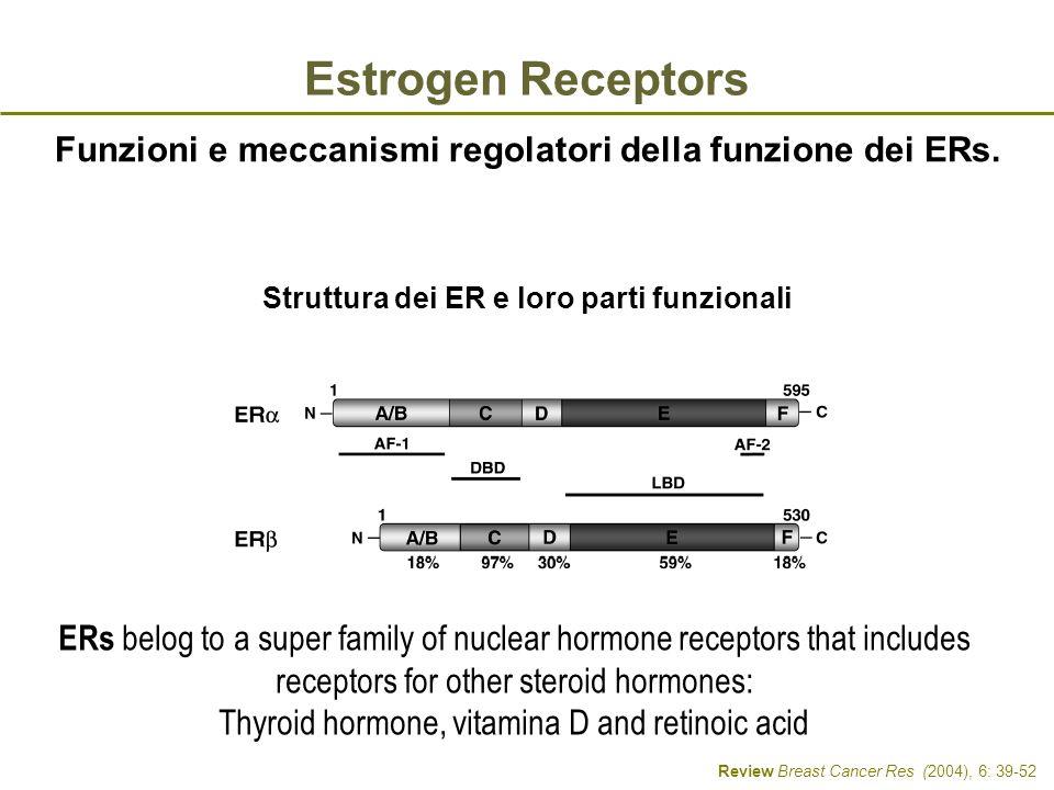 Estrogen Receptors Funzioni e meccanismi regolatori della funzione dei ERs. Struttura dei ER e loro parti funzionali.