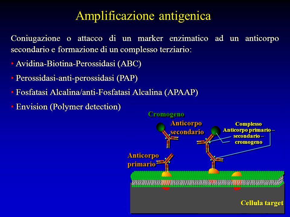 Amplificazione antigenica