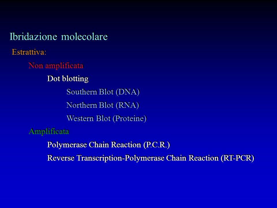 Ibridazione molecolare