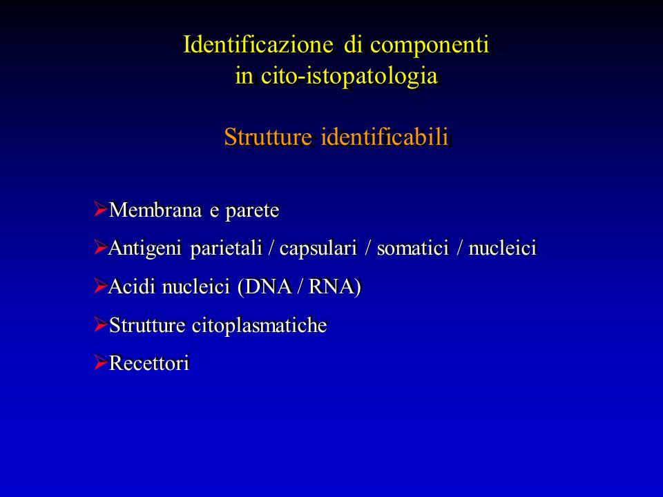 Identificazione di componenti in cito-istopatologia