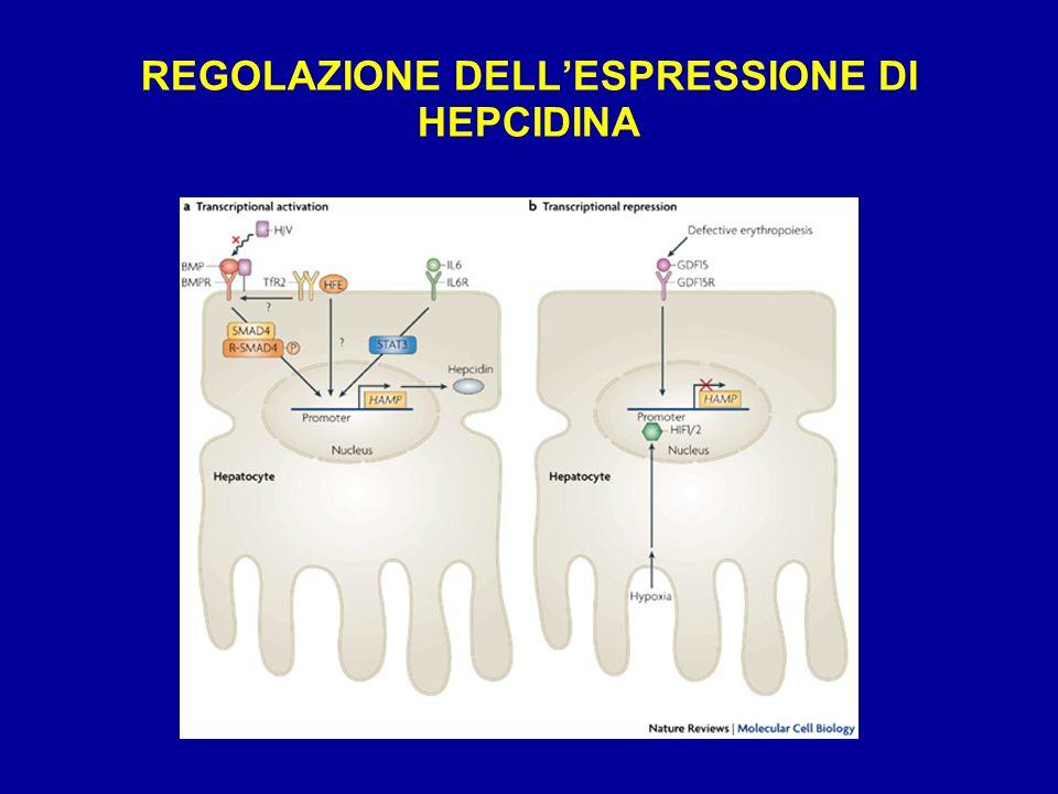REGOLAZIONE DELL'ESPRESSIONE DI HEPCIDINA
