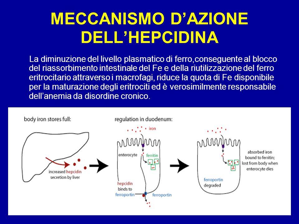 MECCANISMO D'AZIONE DELL'HEPCIDINA