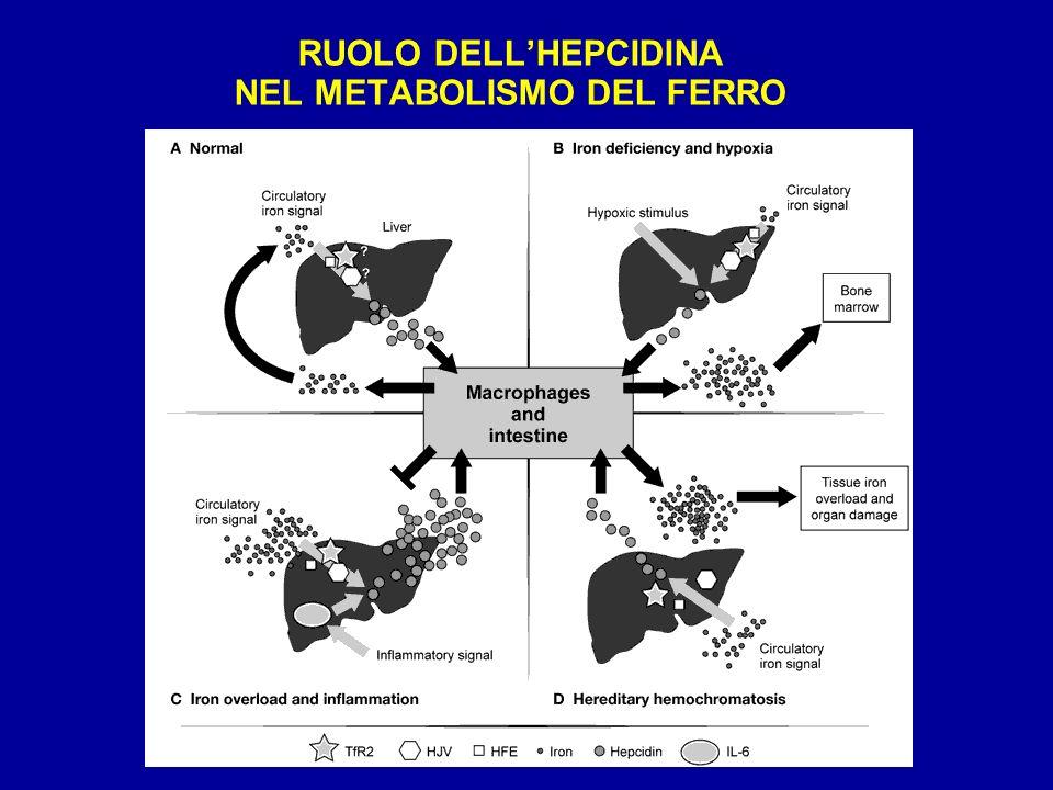 RUOLO DELL'HEPCIDINA NEL METABOLISMO DEL FERRO