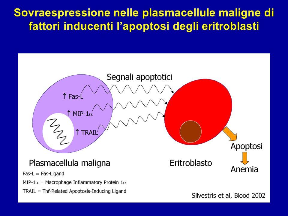 Sovraespressione nelle plasmacellule maligne di fattori inducenti l'apoptosi degli eritroblasti