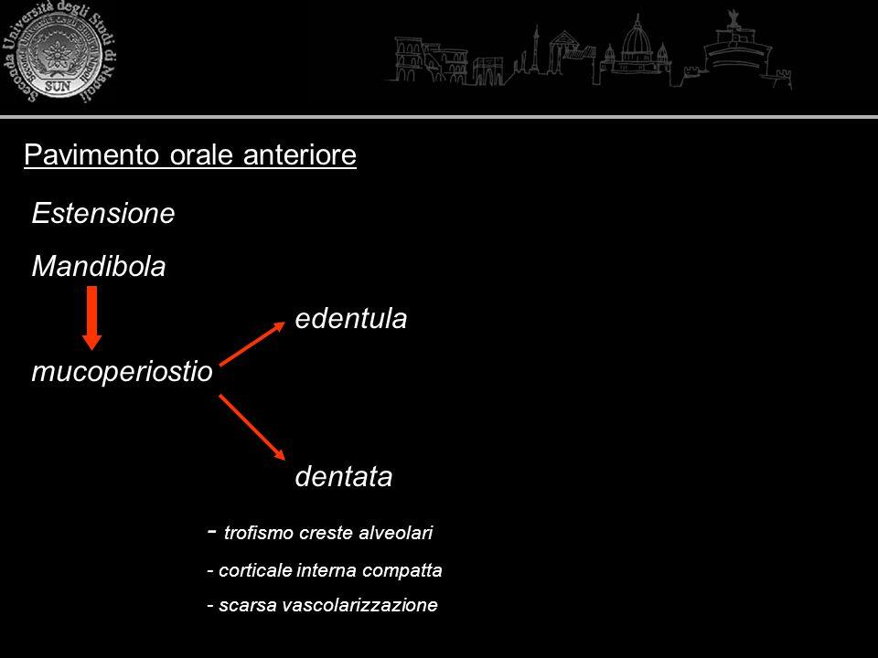 Pavimento orale anteriore