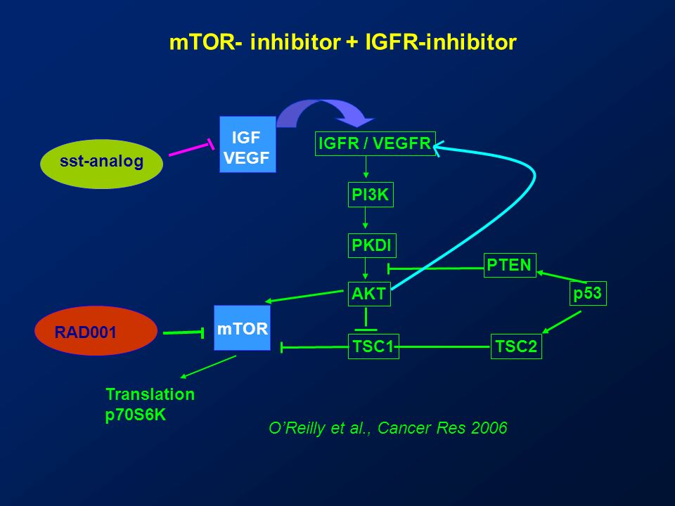 mTOR- inhibitor + IGFR-inhibitor
