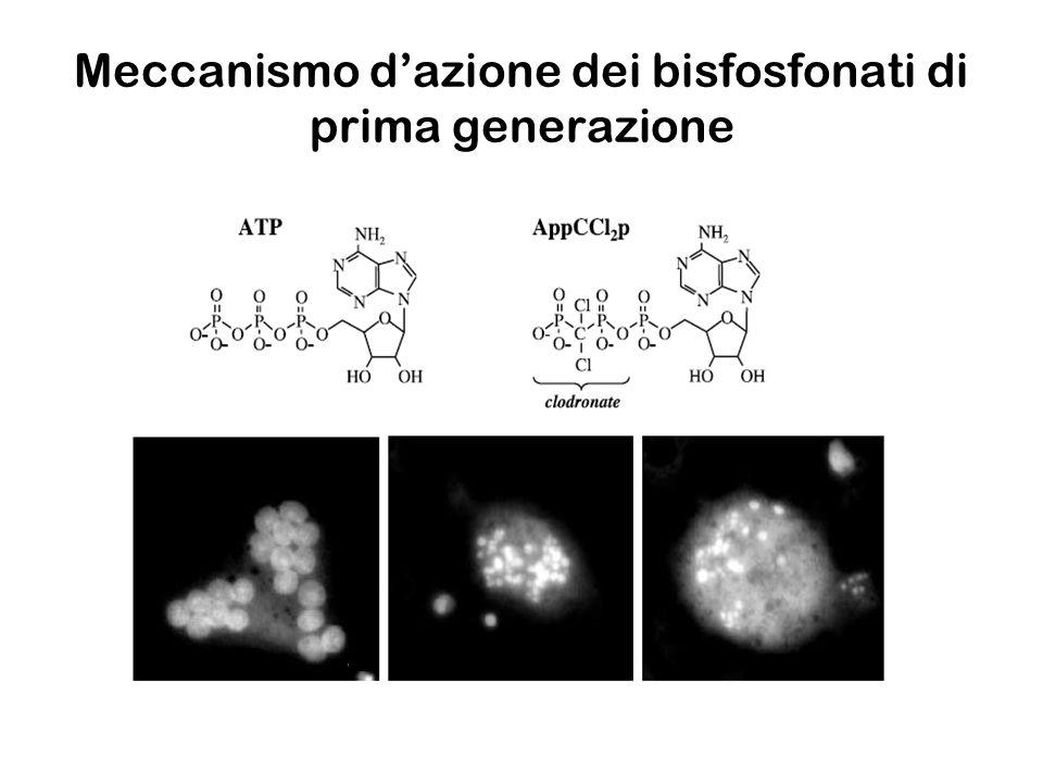 Meccanismo d'azione dei bisfosfonati di prima generazione