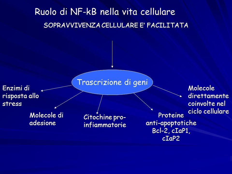 Ruolo di NF-kB nella vita cellulare