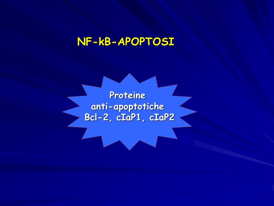 NF-kB-APOPTOSI Proteine anti-apoptotiche Bcl-2, cIaP1, cIaP2