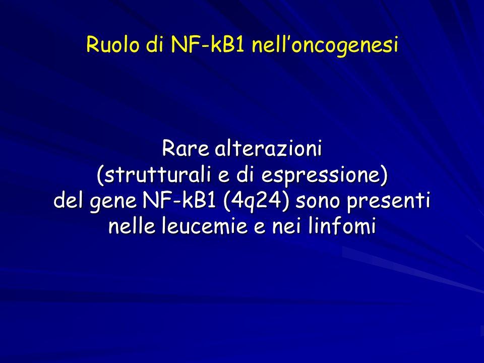 Ruolo di NF-kB1 nell'oncogenesi