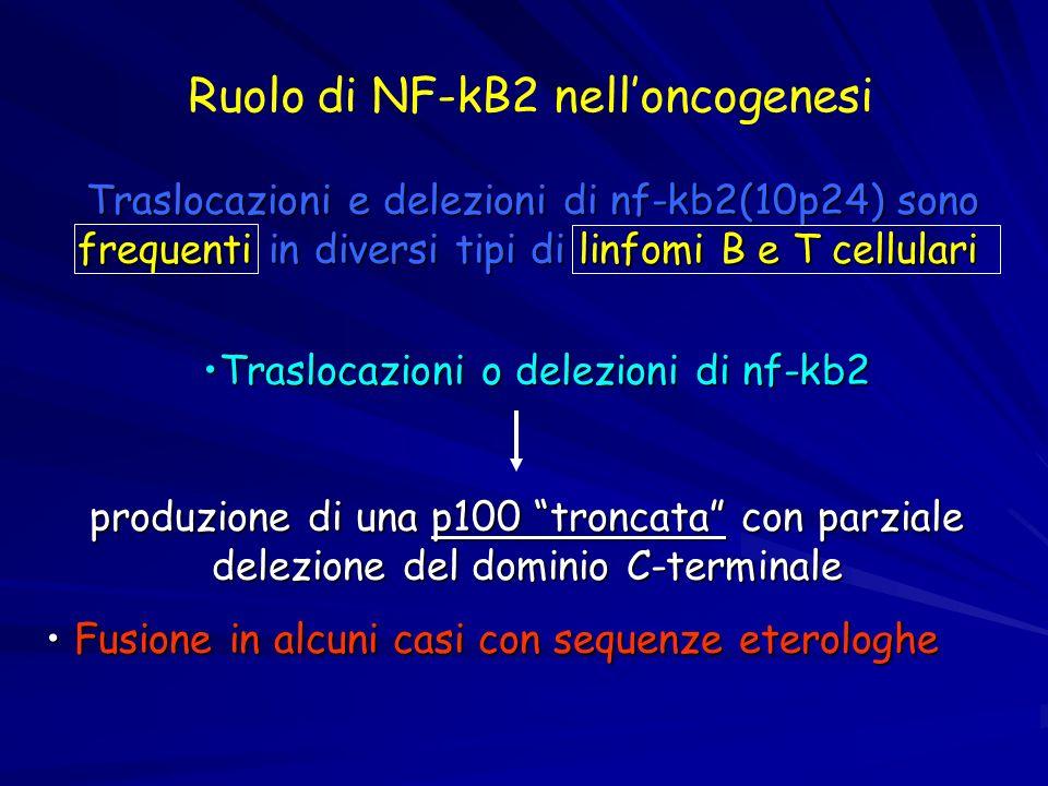 Ruolo di NF-kB2 nell'oncogenesi
