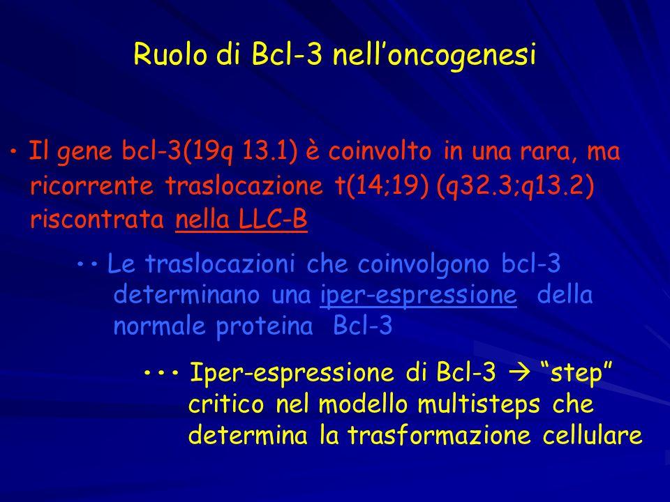 Ruolo di Bcl-3 nell'oncogenesi