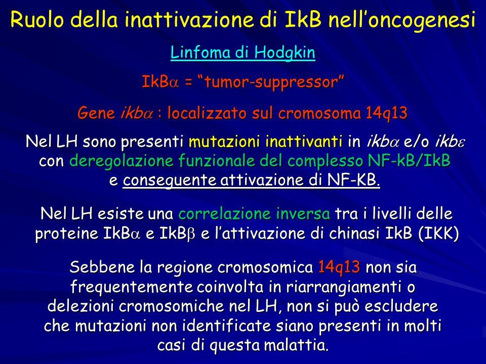 Ruolo della inattivazione di IkB nell'oncogenesi