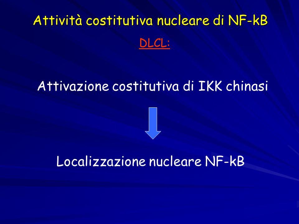 Attività costitutiva nucleare di NF-kB