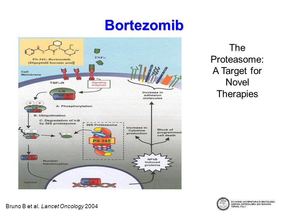 The Proteasome: A Target for Novel Therapies