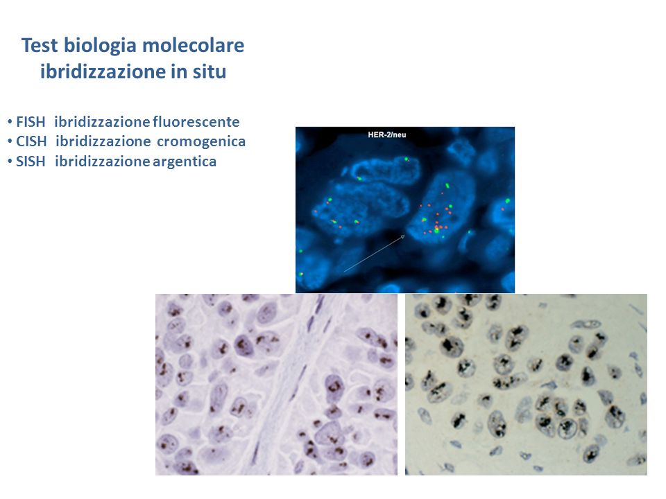 Test biologia molecolare ibridizzazione in situ