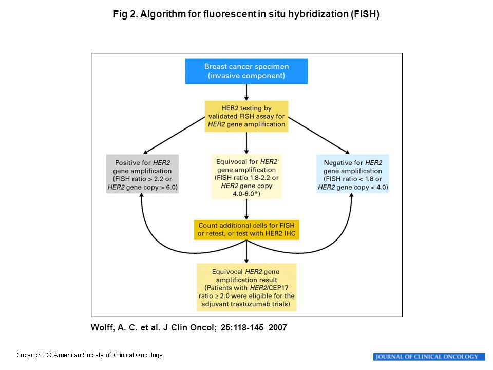 Fig 2. Algorithm for fluorescent in situ hybridization (FISH)