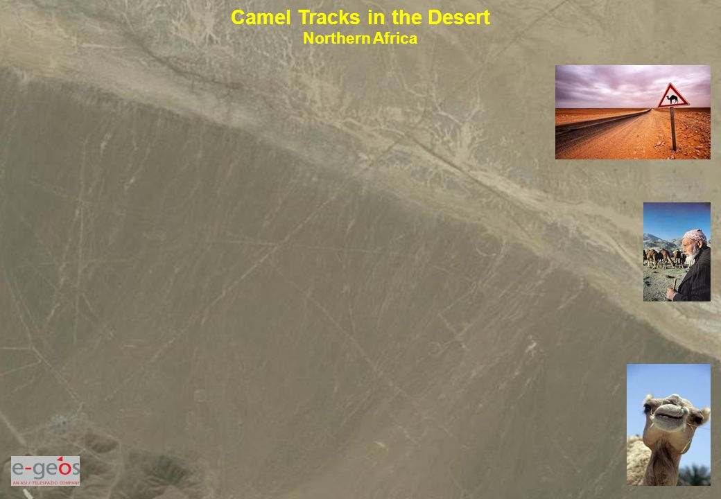 Camel Tracks in the Desert Northern Africa