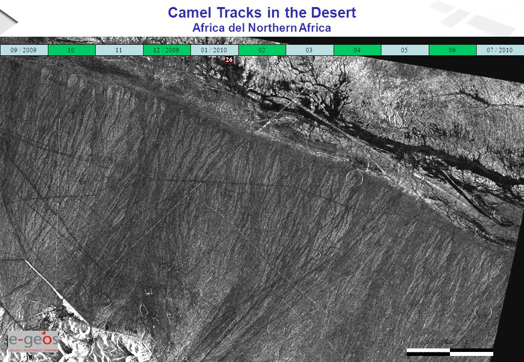Camel Tracks in the Desert Africa del Northern Africa