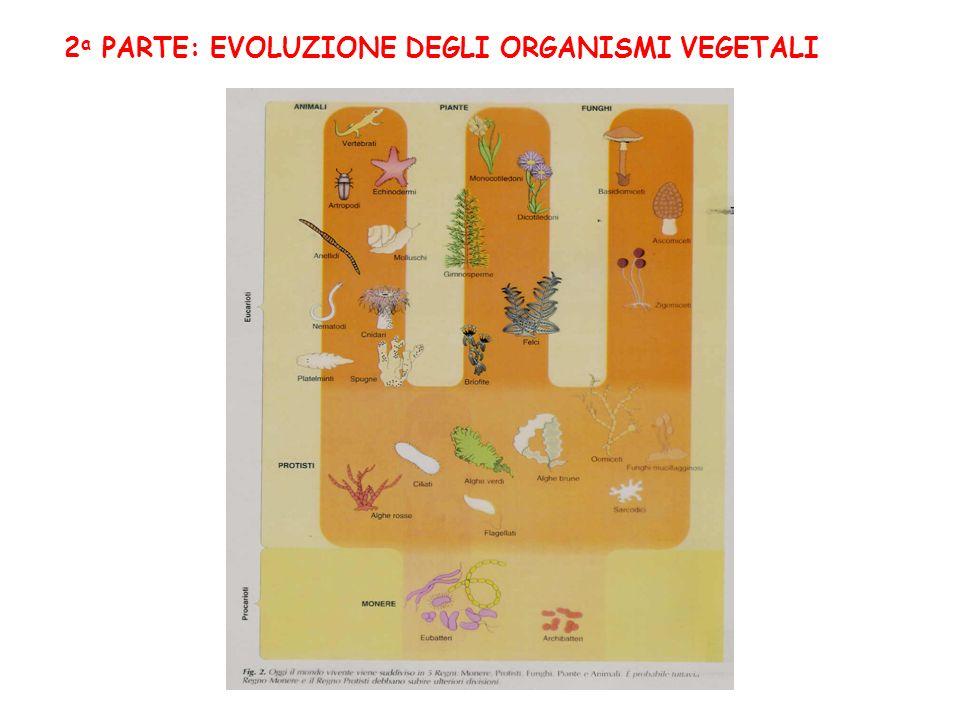 2a PARTE: EVOLUZIONE DEGLI ORGANISMI VEGETALI