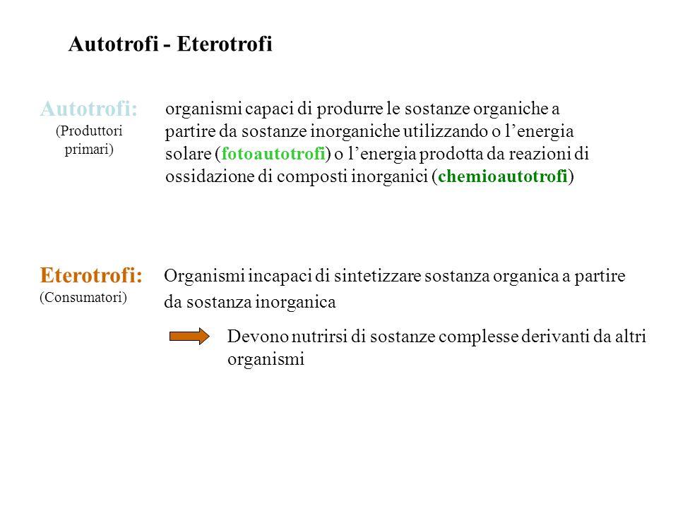 Autotrofi - Eterotrofi