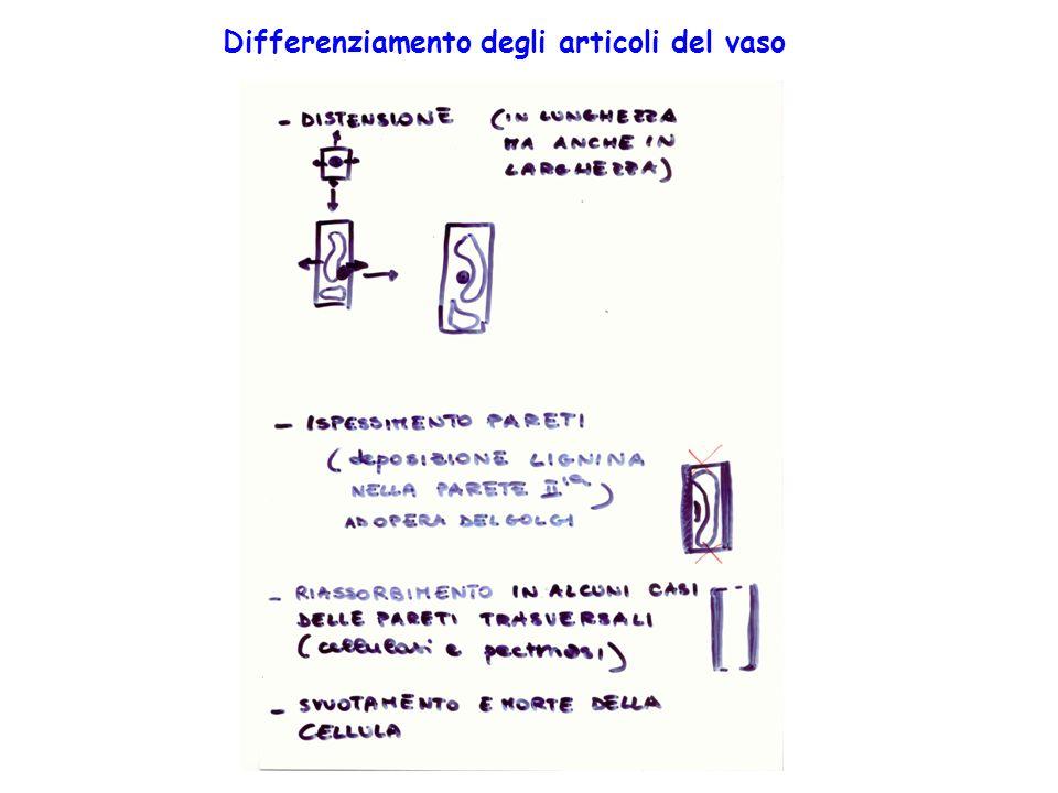 Differenziamento degli articoli del vaso