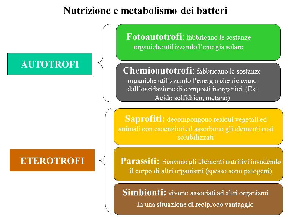 Nutrizione e metabolismo dei batteri