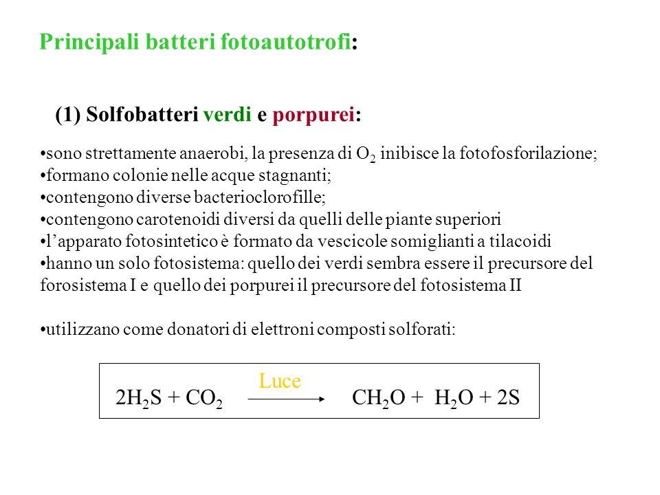 Principali batteri fotoautotrofi: