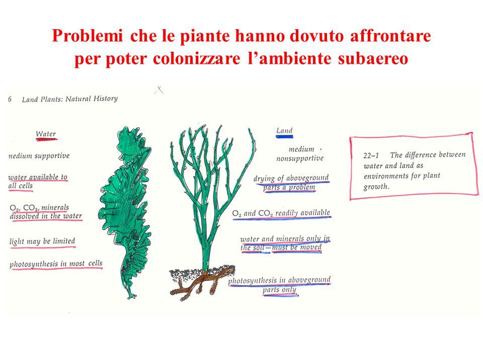 Problemi che le piante hanno dovuto affrontare per poter colonizzare l'ambiente subaereo