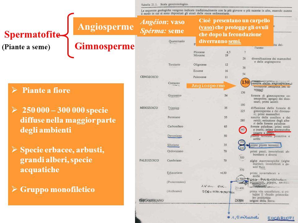 Angiosperme Angiosperme Spermatofite Gimnosperme Piante a fiore