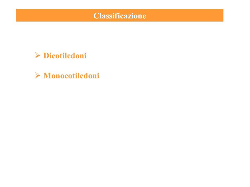 Classificazione Dicotiledoni Monocotiledoni