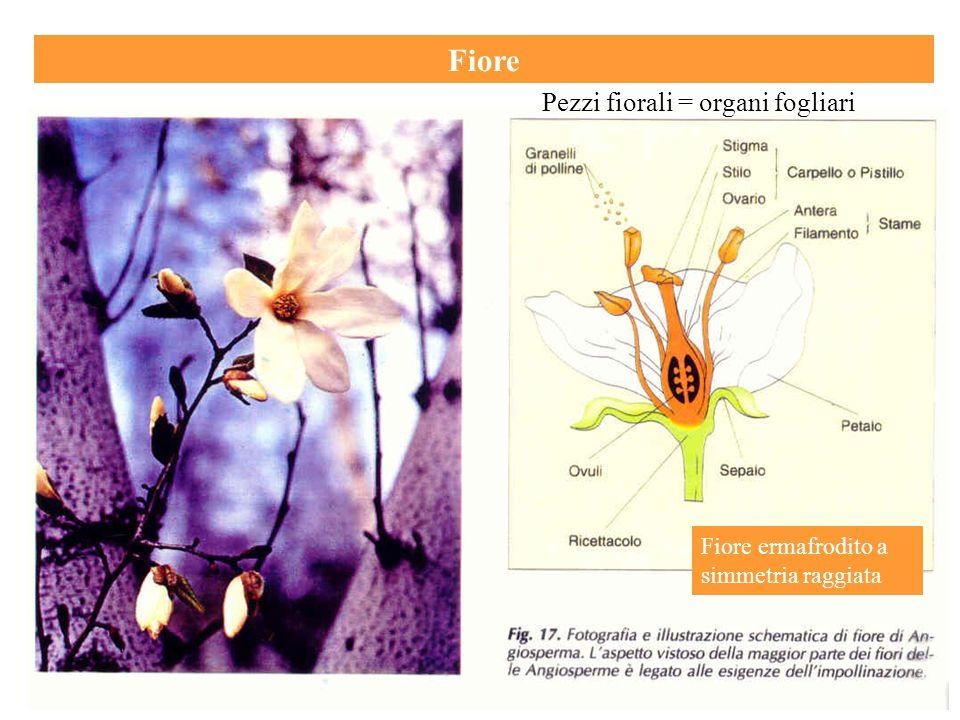 Fiore Pezzi fiorali = organi fogliari
