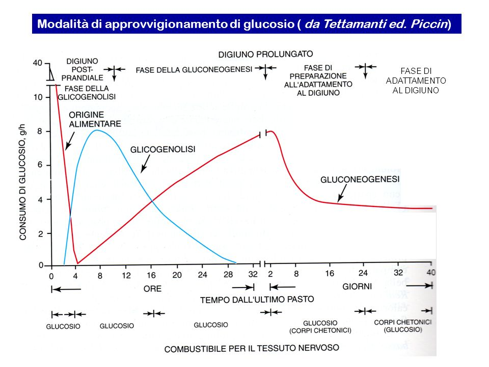 Modalità di approvvigionamento di glucosio ( da Tettamanti ed. Piccin)