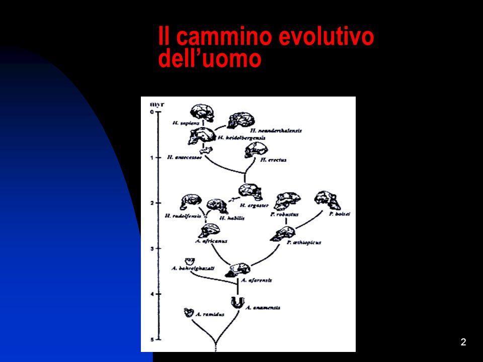 Il cammino evolutivo dell'uomo