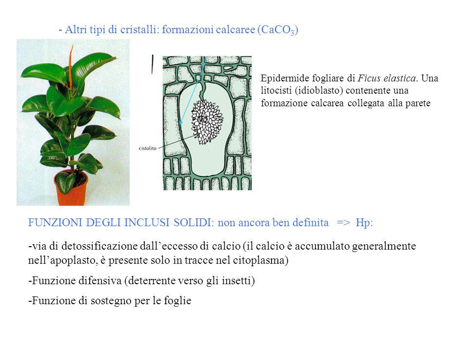 - Altri tipi di cristalli: formazioni calcaree (CaCO3)