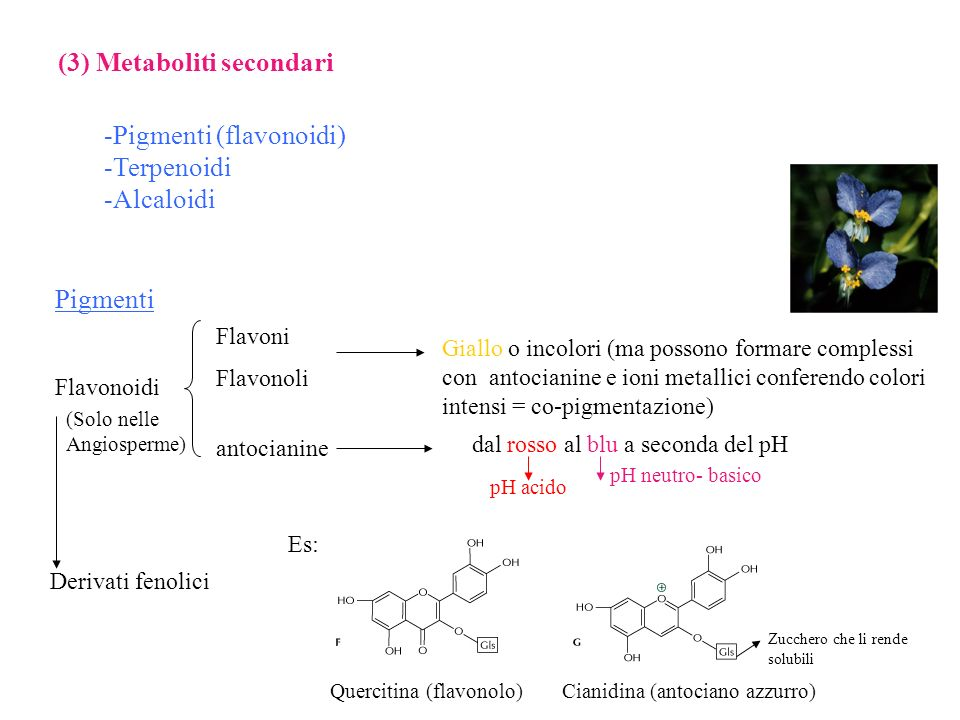 (3) Metaboliti secondari