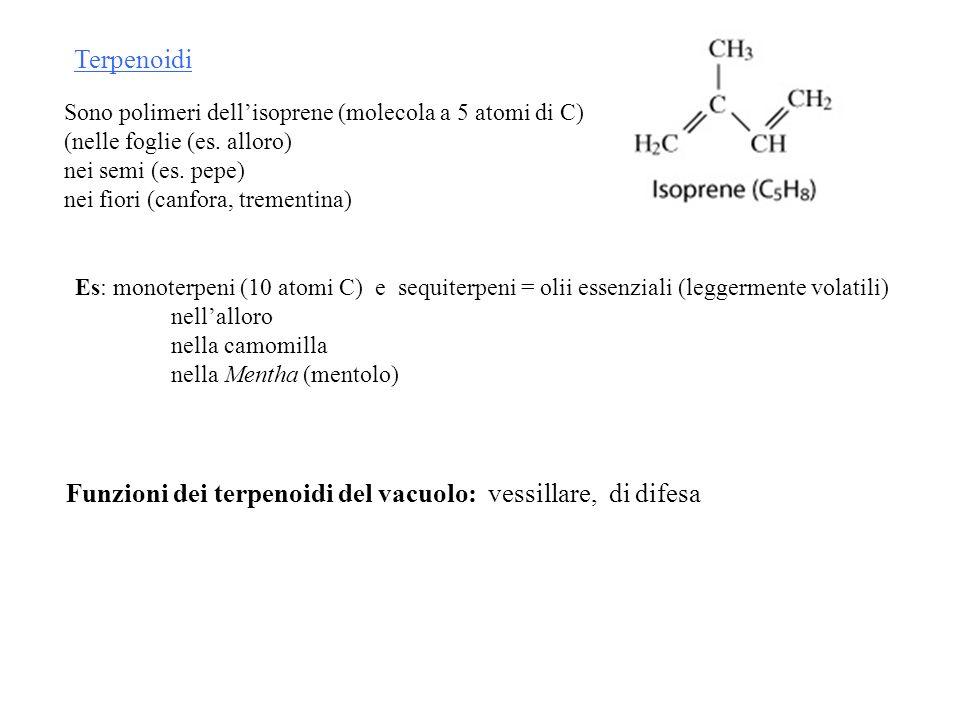Funzioni dei terpenoidi del vacuolo: vessillare, di difesa