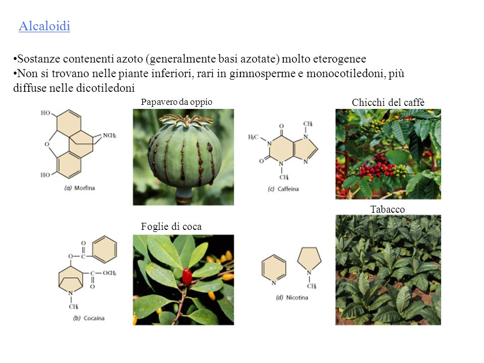 Alcaloidi Sostanze contenenti azoto (generalmente basi azotate) molto eterogenee.