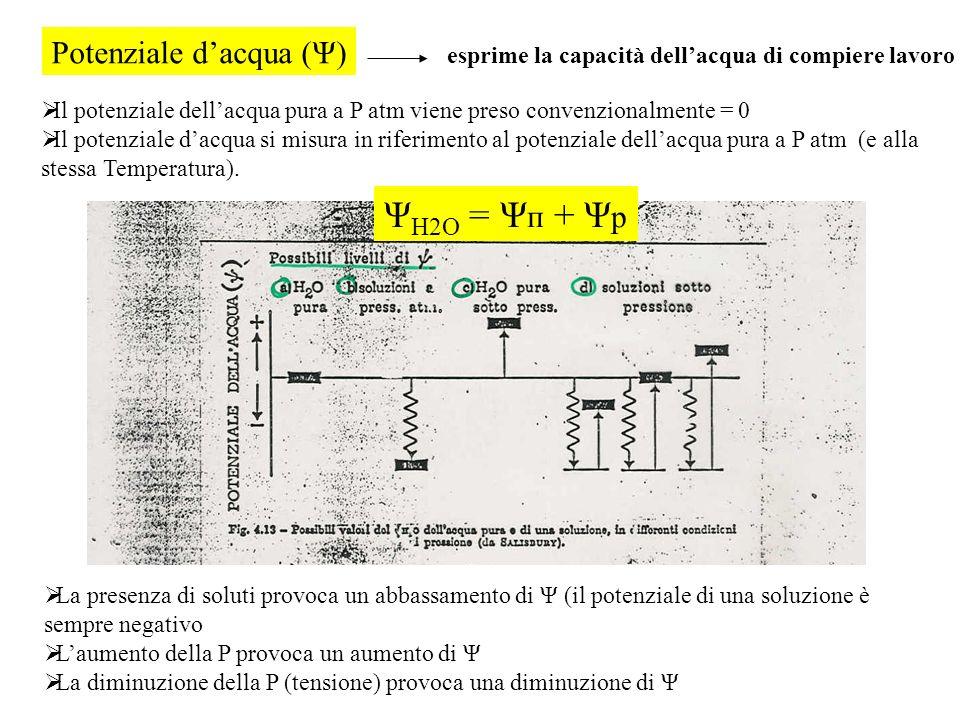 ΨH2O = Ψп + Ψp Potenziale d'acqua (Ψ)