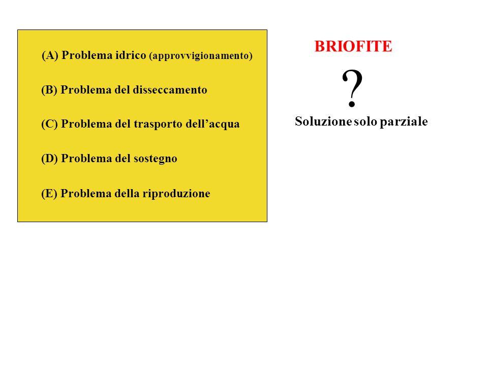 BRIOFITE Soluzione solo parziale