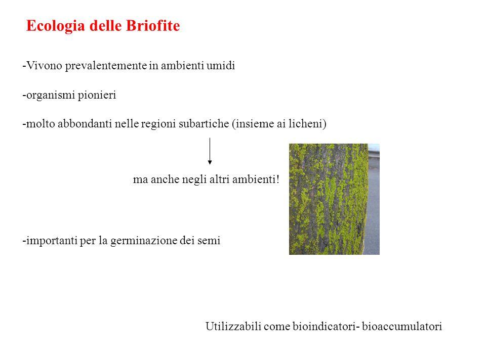 Ecologia delle Briofite