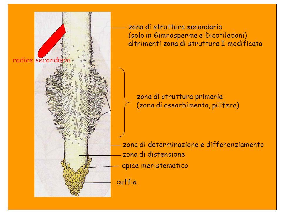 Struttura primaria + struttura secondaria