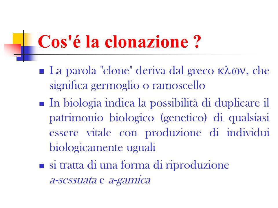 Cos é la clonazione La parola clone deriva dal greco , che significa germoglio o ramoscello.