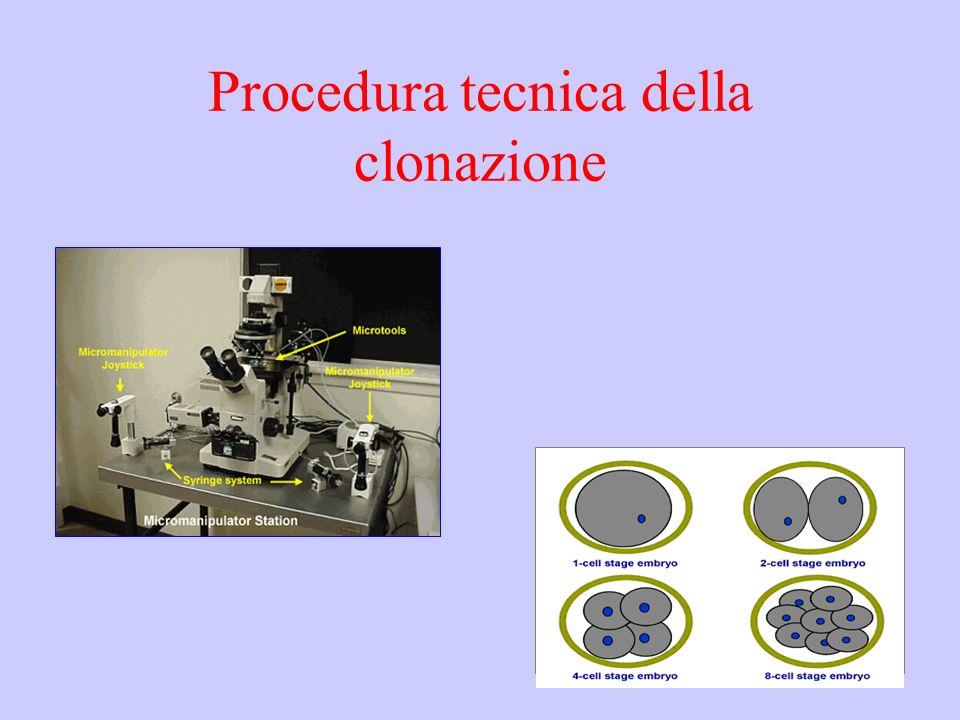 Procedura tecnica della clonazione