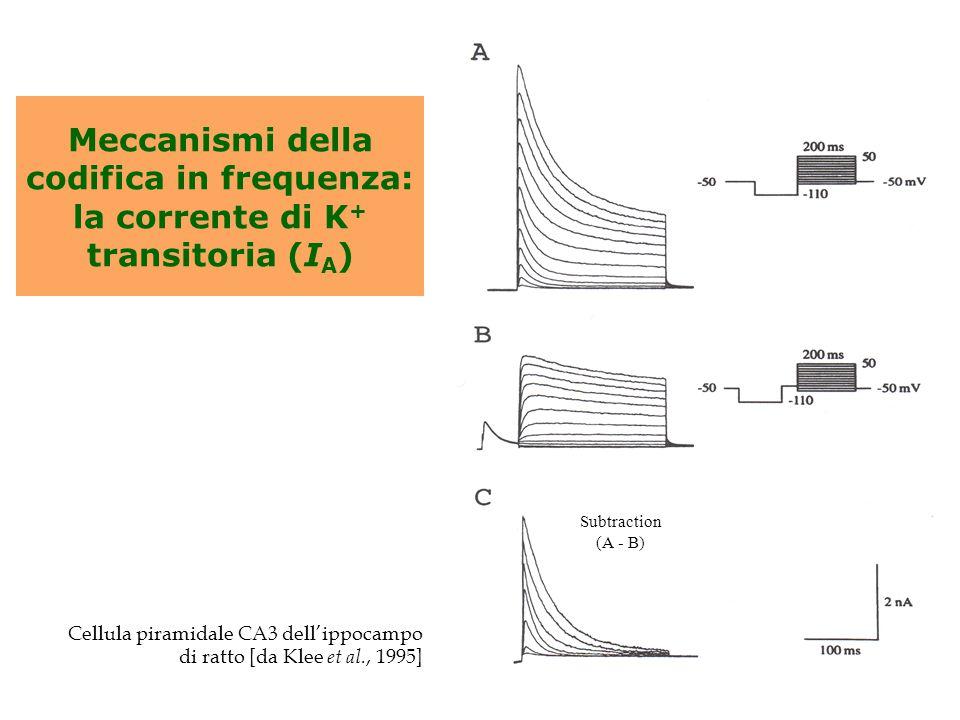 Subtraction (A - B) Meccanismi della codifica in frequenza: la corrente di K+ transitoria (IA) Cellula piramidale CA3 dell'ippocampo.
