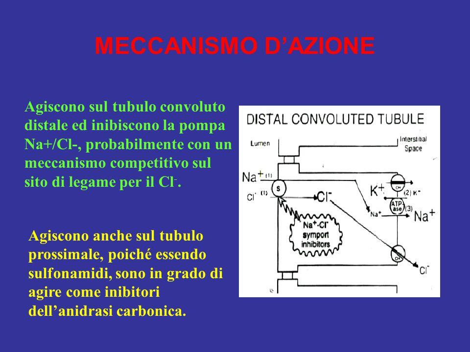 MECCANISMO D'AZIONE Agiscono sul tubulo convoluto