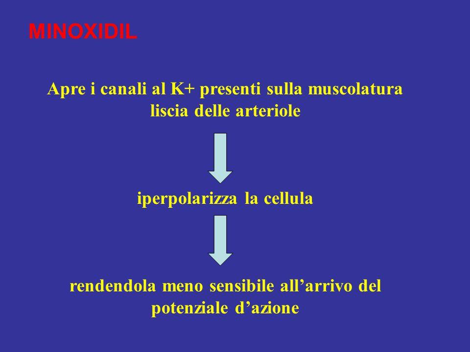 MINOXIDIL Apre i canali al K+ presenti sulla muscolatura liscia delle arteriole. iperpolarizza la cellula.
